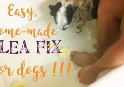 flea fix for dogs