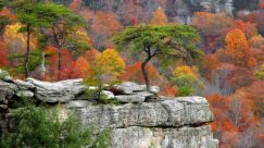 autumn-colors-on-the-cliff-3937-706