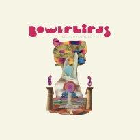 Bowerbirds – becalmyounglovers