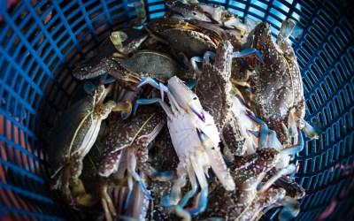 Crab Market 2-9