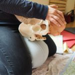 Hebammenpraxis Schöneweide Hebammenbetreuung Geburt