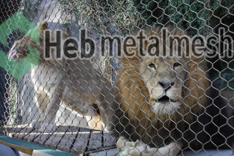 zoo mesh for lion exhibit