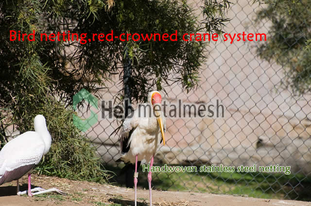 red-crowned crane netting
