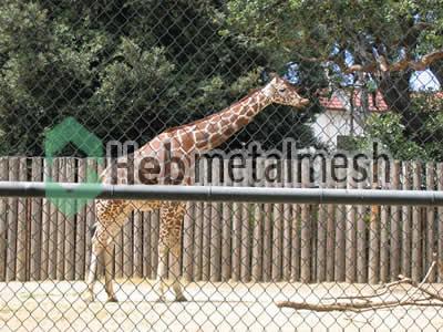 deer exhibit fence manufactruer, deer enclosure mesh, deer cage mesh