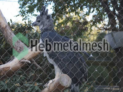 zoo enclousres for eagle exhibit, eagle protection netting, eagle barrier netting for sale