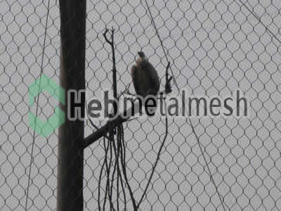 Factory supplies for eagle exhibit fencing mesh, ealge enclosures mesh