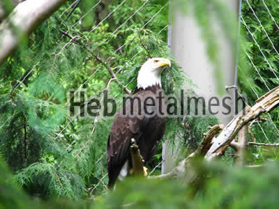 stainless steel mesh for eagle exhibit, eagle enclosures, eagle cage
