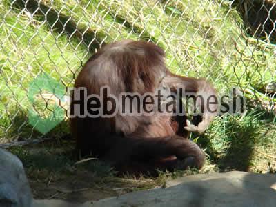 stainless steel mesh for gibbon protection netting, gibbon barrier mesh