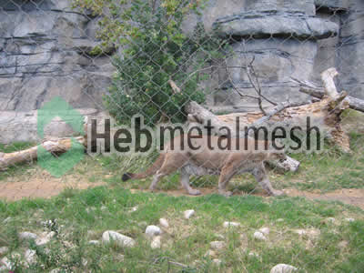 stainless steel mesh for lion exhibit, lion enclosures, lion cage