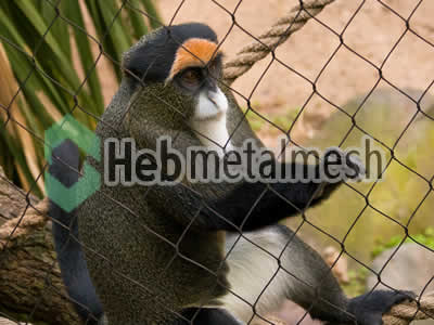 zoo mesh facotry for monkey exhibit, monkey cages mesh, monkey fencing wholesaler