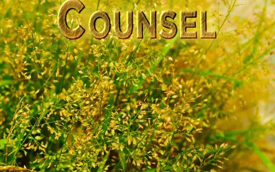 4th August 2020: Our Daily deLIGHT~3rd Day-Counsel