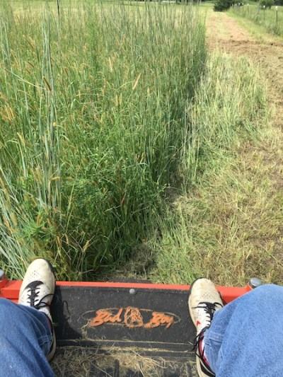 Musings from the Mower