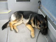 Å vilar ut på bussen