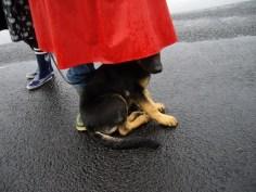 C söker skydd för regnet