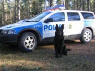 Ips, polishund