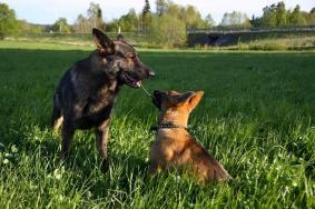 Gizmo berättar för Aragorn hur det ligger till