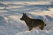 Alfa står äntligen still i snön