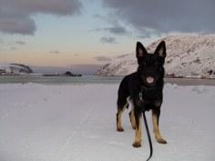 201011 Kjöllefjord hundpromenader (24)_1024x768
