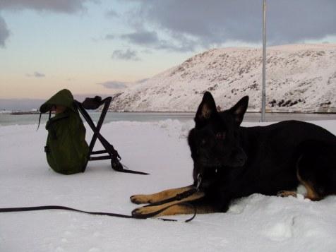 201011 Kjöllefjord hundpromenader (26)_1024x768