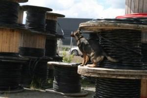Bombhunden H. Zpike söker sprängmedel