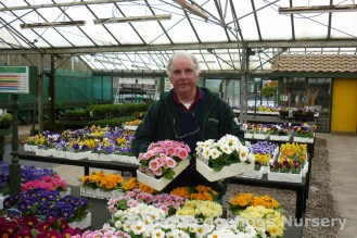 pansies & primulas from Scot Plants Direct
