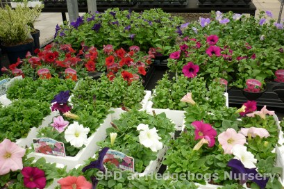 bedding plants to fill those baskets & tubs!