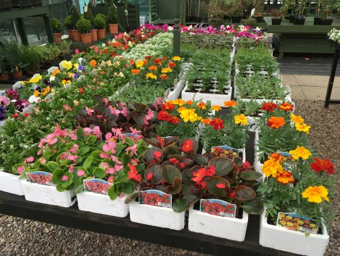 Bedding Plants at Hedgehogs Nursery