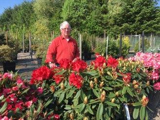 Rhododendron Vulcan