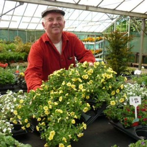 summer bedding plants for spring gardens