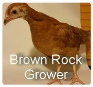 Brown Rock Grower
