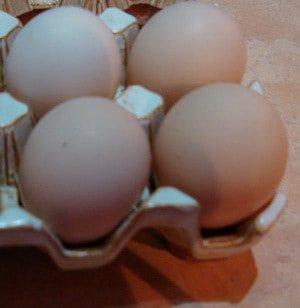 Faverolles chicken egg