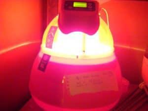 Covatutto 16L incubator