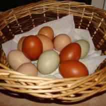 Selection of coloured eggs
