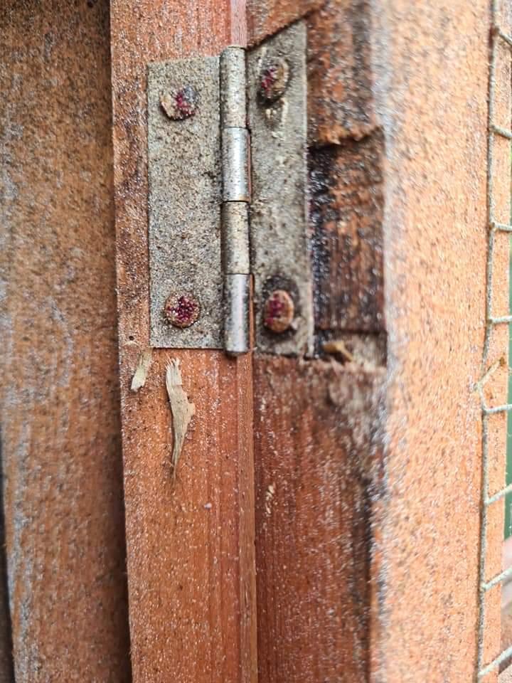 Red mite clusters round hinge