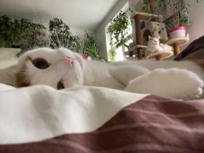 Yvonne Rueff liebt Tiere und hat selbst zwei Katzen und ihre Mia. (Foto privat)