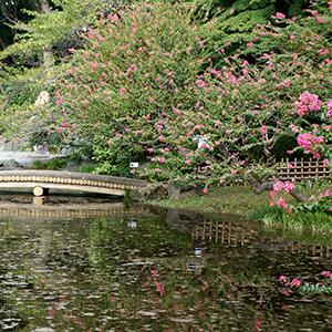 Tokyo Jardin du Palais Imperial