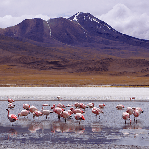 Bolivie - Sud-Lípez / Lagune