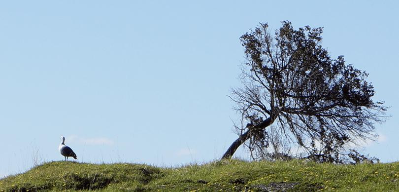 Argentine- Ushuaïa / Parc National Tierra del Fuego