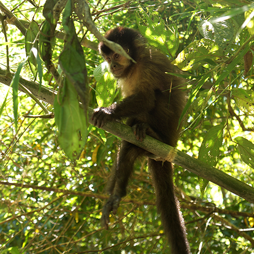 Argentine - Iguazu / Singe