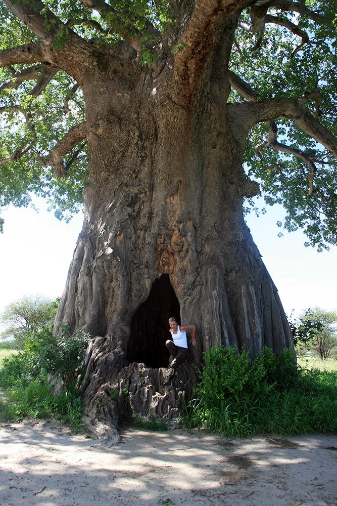 BaobabBraconnier