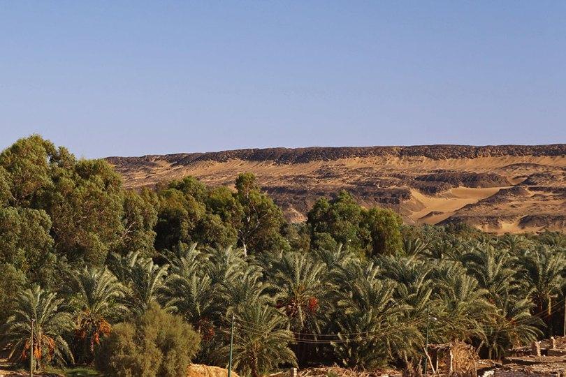 Egypte - Al-Bahariya : Palmeraie