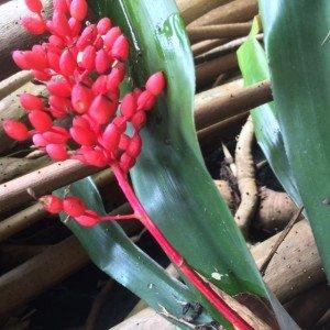 Unidentified bromeliad flower