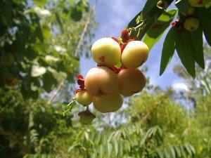 agricultural tourism katuk