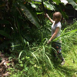 Jungle Queen Volunteer