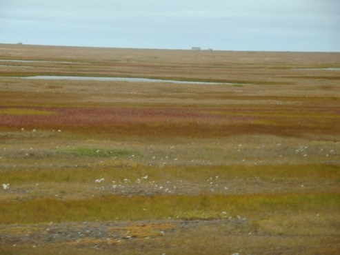 Top of the world tour barrow alaska tundra scenery