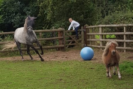Ponies playing with gym ball