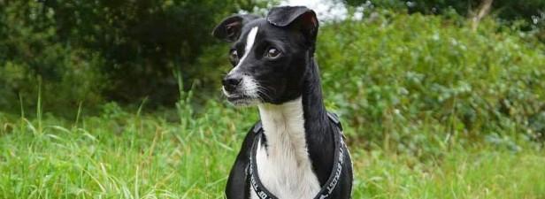 Hund - Foto: WAZ