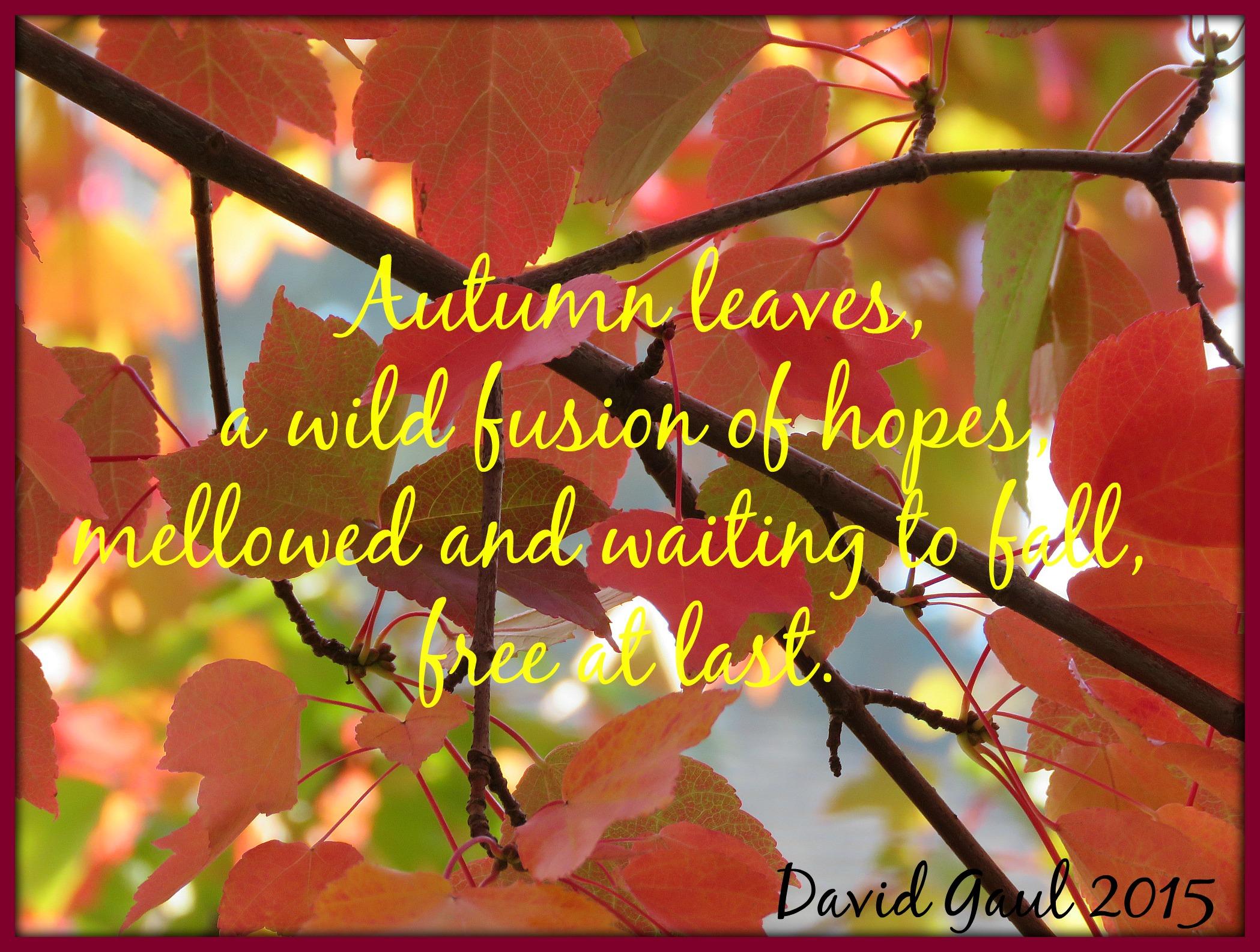 leavesIMG_0170