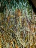 barley stitches embroidery detail