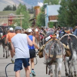 Burro Days in Fairplay Colorado